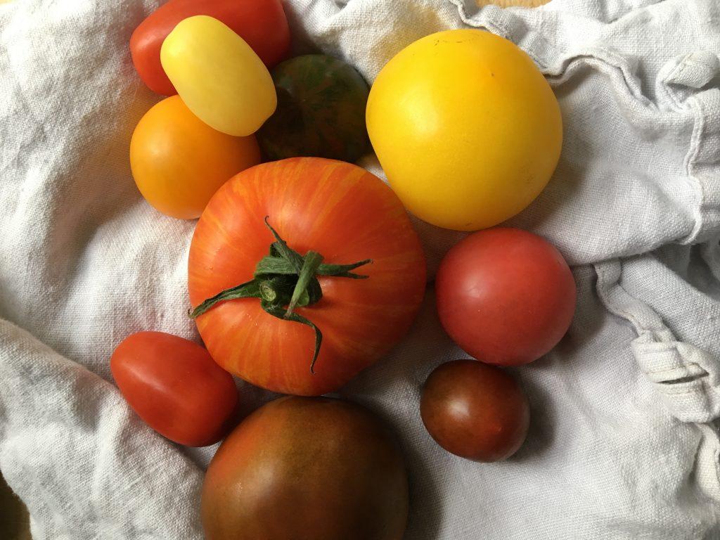 Tomatsäsong