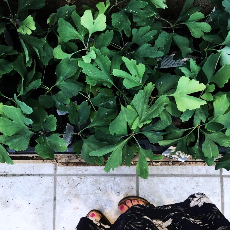 Växter jag tittar på i blomaffären