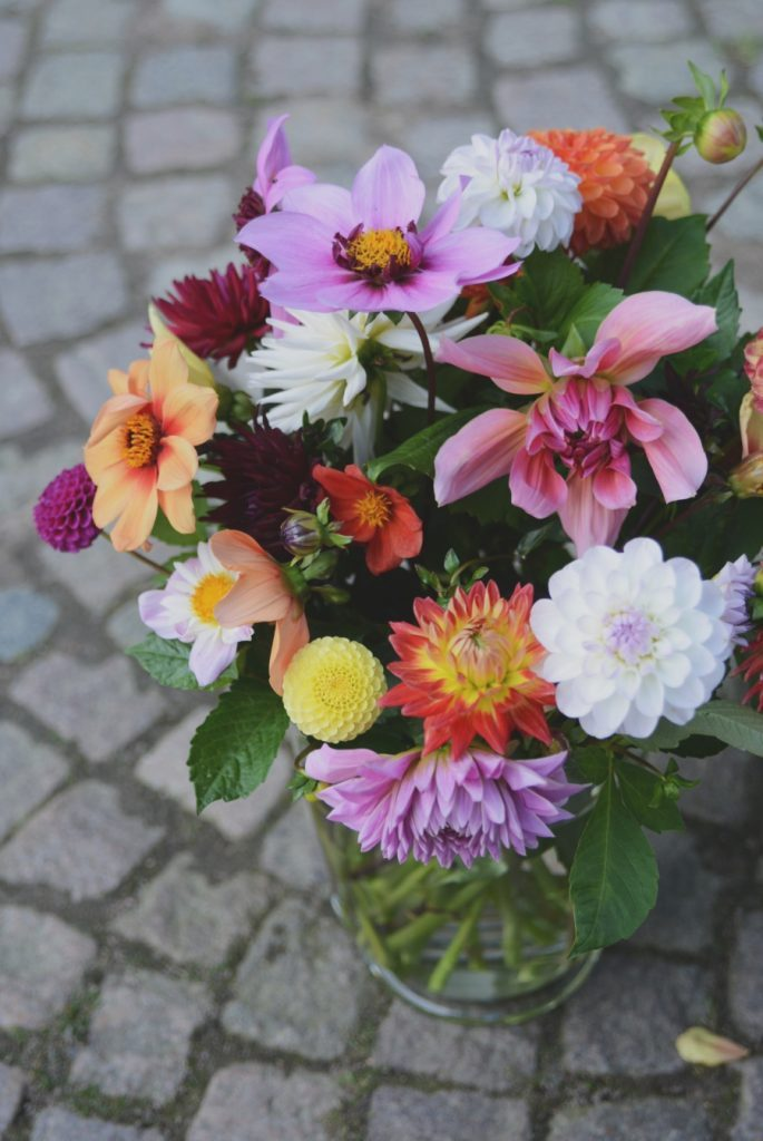 Let the Dahlia season begin!